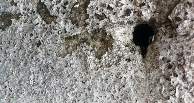 Holes, by Graham Allen